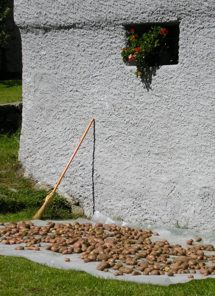 Kartoffeltrocknen